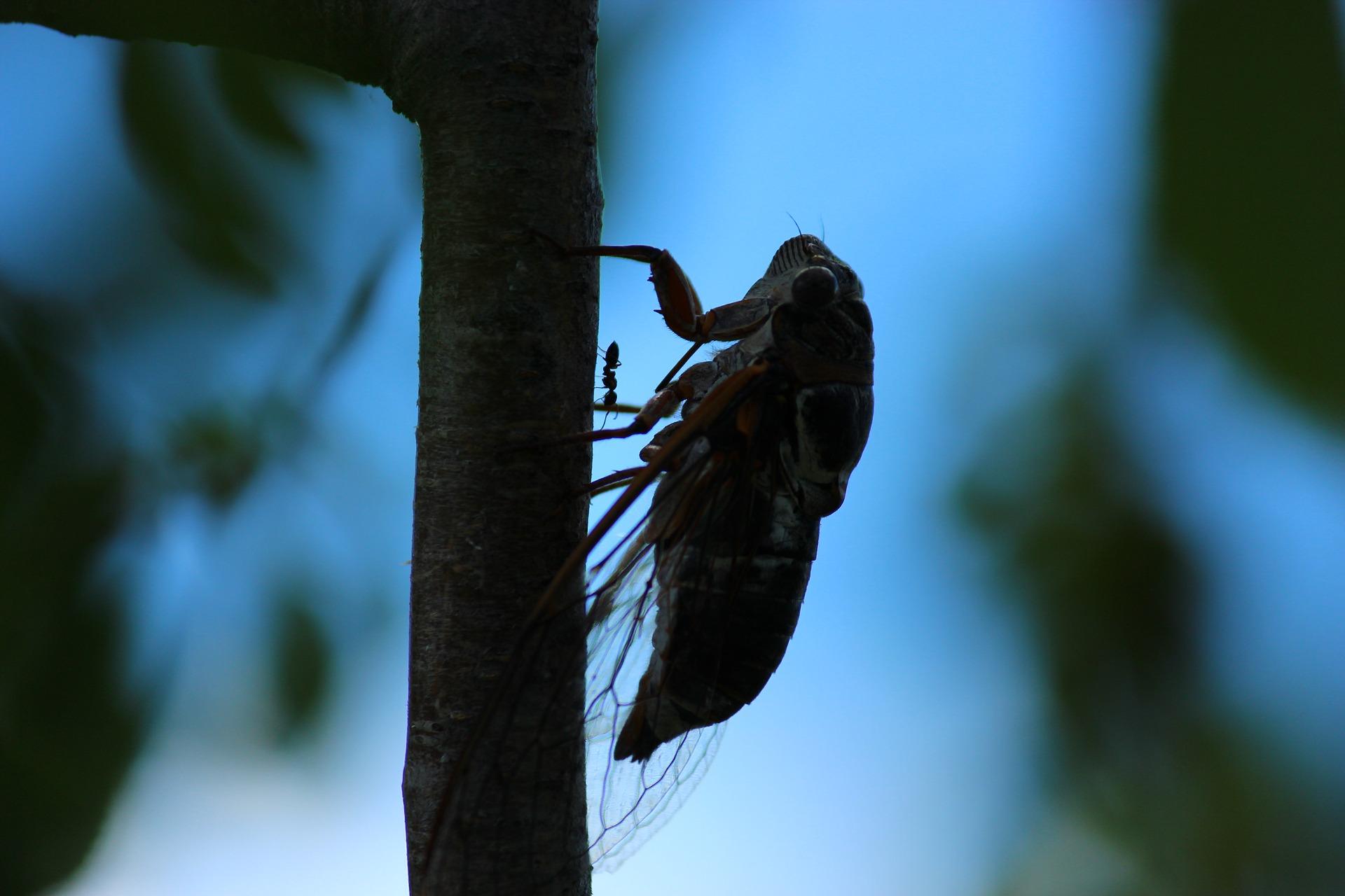 えび、かに、甲殻類アレルギーの人は注意。